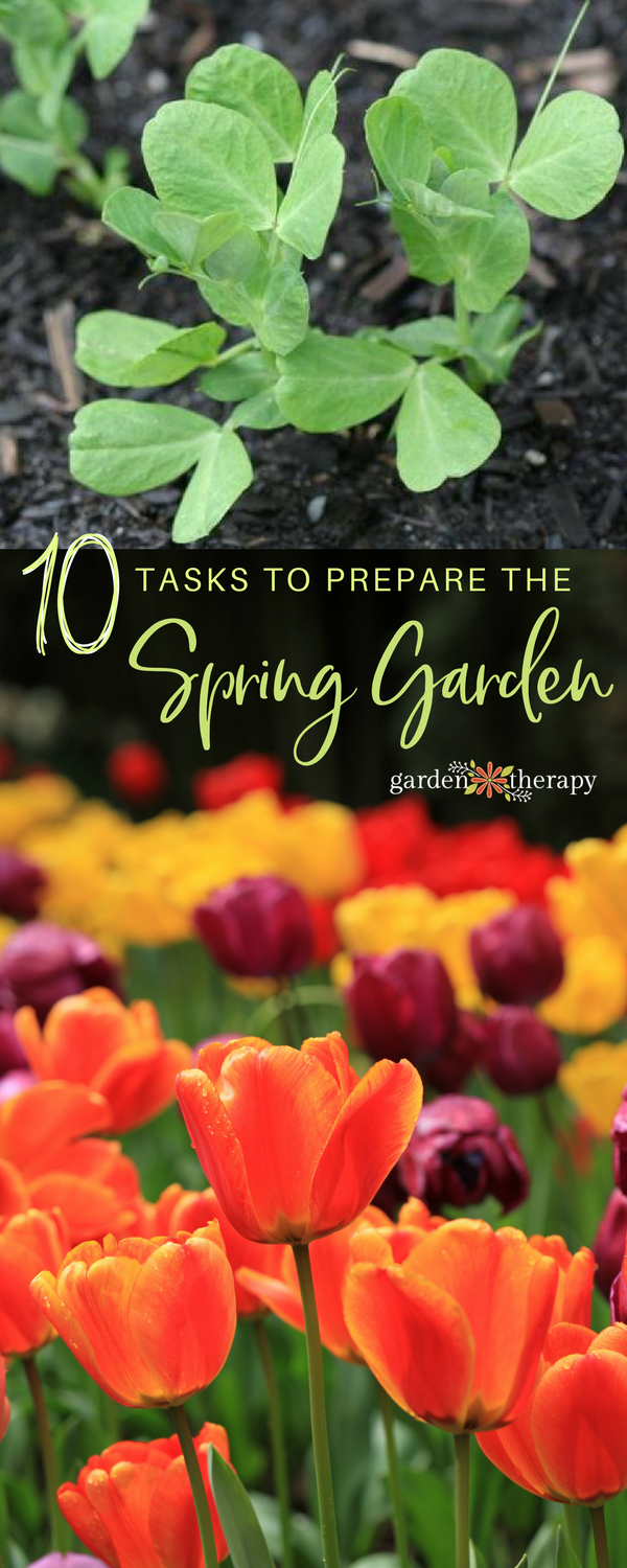 colorful Tulips and pea sprouts with text 10 Tasks to Prepare the Spring Garden