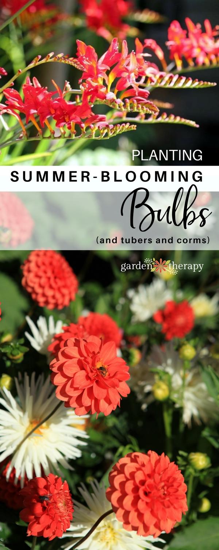 Planter Summer-Blooming Bulbs