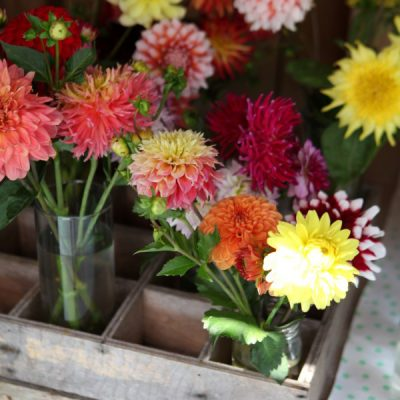 Cut Flower Gardening: The Best Cutting Flowers + Growing & Harvesting Tips