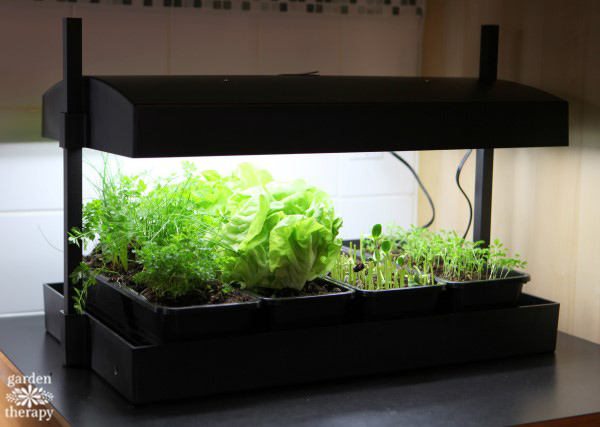 Grow Light Kitchen Garden
