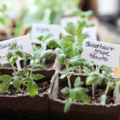 How to Grow Heat-Loving Vegetables from Seed