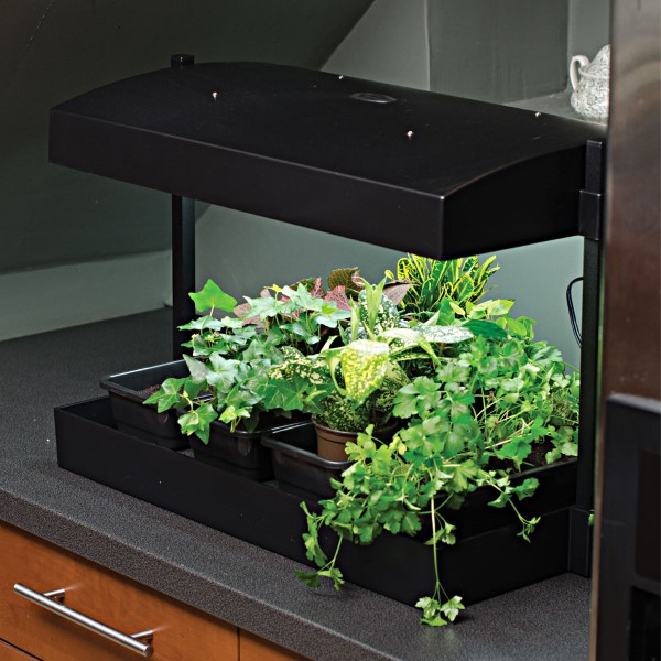 Countertop Gardening for Every Kitchen - Garden Therapy