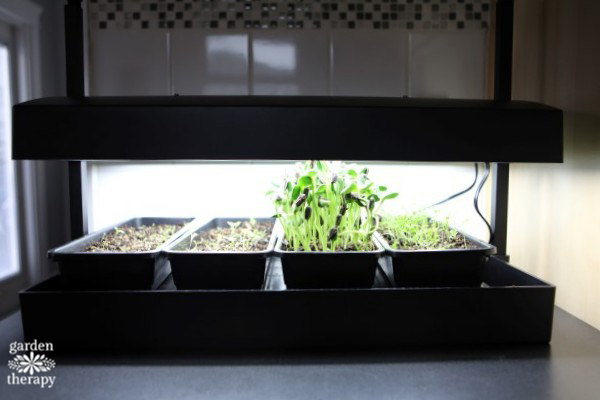 Growlight garden for countertop indoor gardening