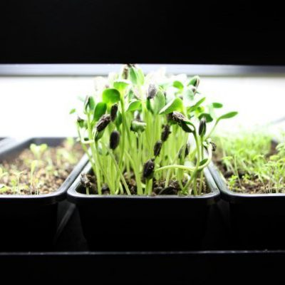 Countertop Gardening for Every Kitchen