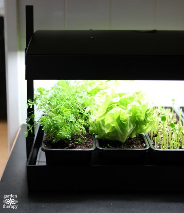 Countertop Gardening For Every Kitchen Garden Therapy