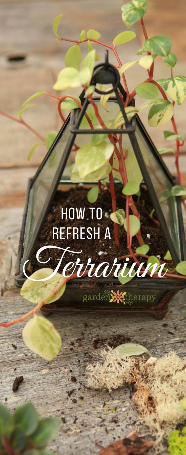 Refresh a terrarium annually to keep it gorgeous and healthy