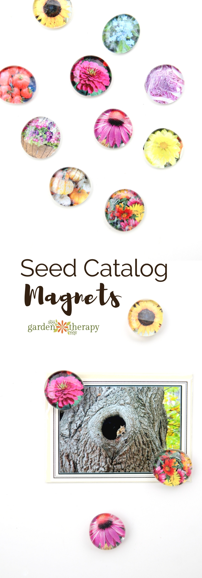 How to make magnets from the gorgeous photos in seed catalogs