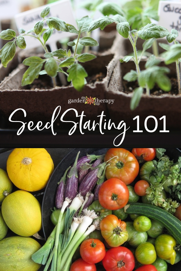 Seed Starting 101: all you need to start a garden from seed this year