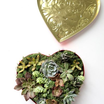 A Sweet and Succulent Valentine