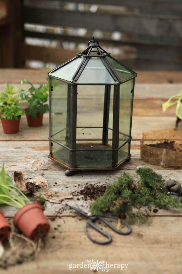 Have an Overgrown or Dying Terrarium? Get Creative with a Makeover
