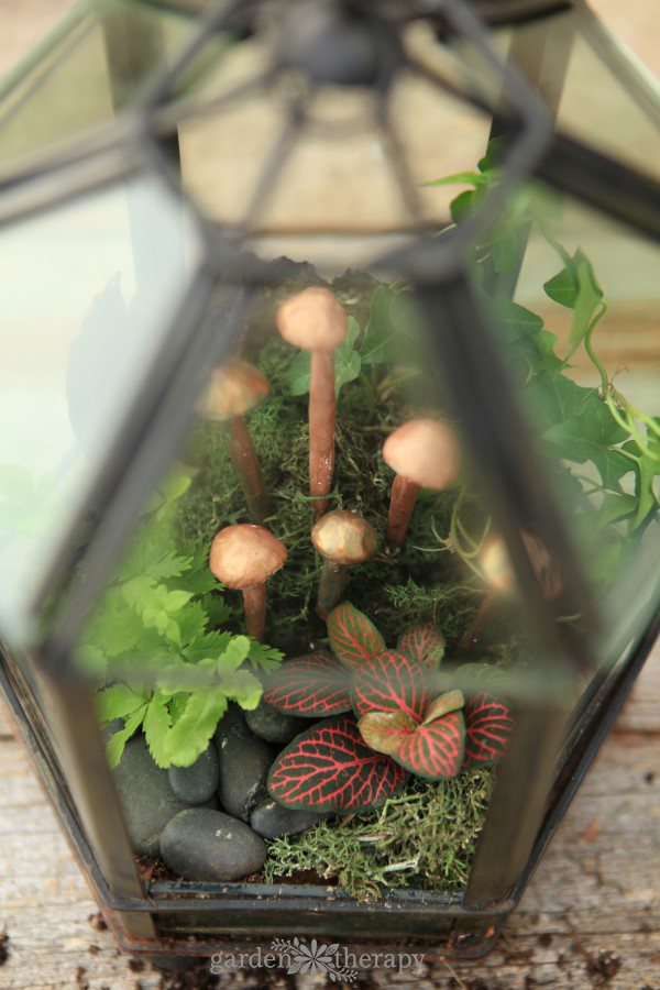 Give a terrarium a makeover every few years to keep it looking beautiful.