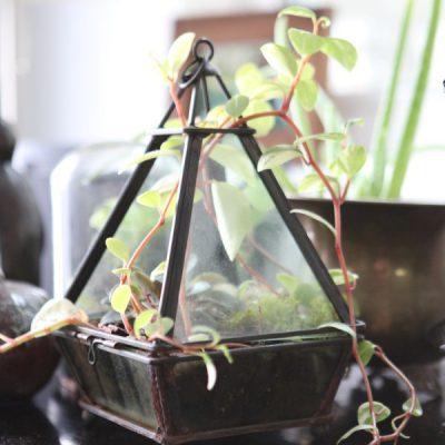Indoor Plant Care: How to Refresh a Terrarium