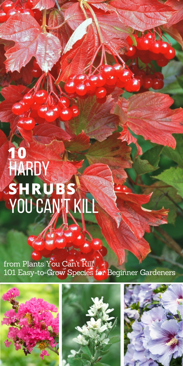 10 hardy shrubs you can't kill