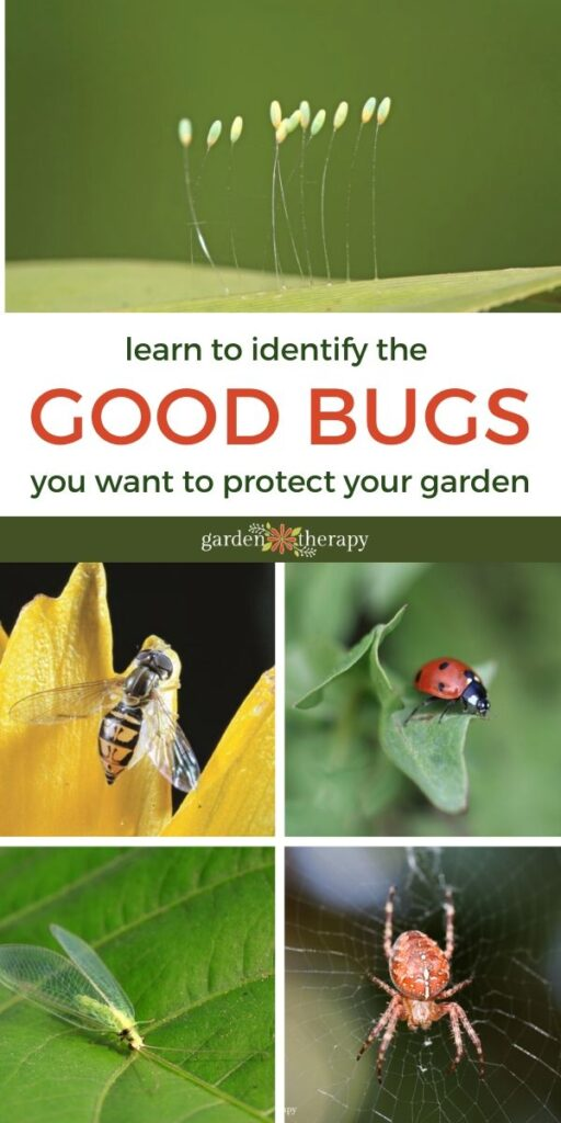 Learn to Identify the GOOD BUGS in your garden