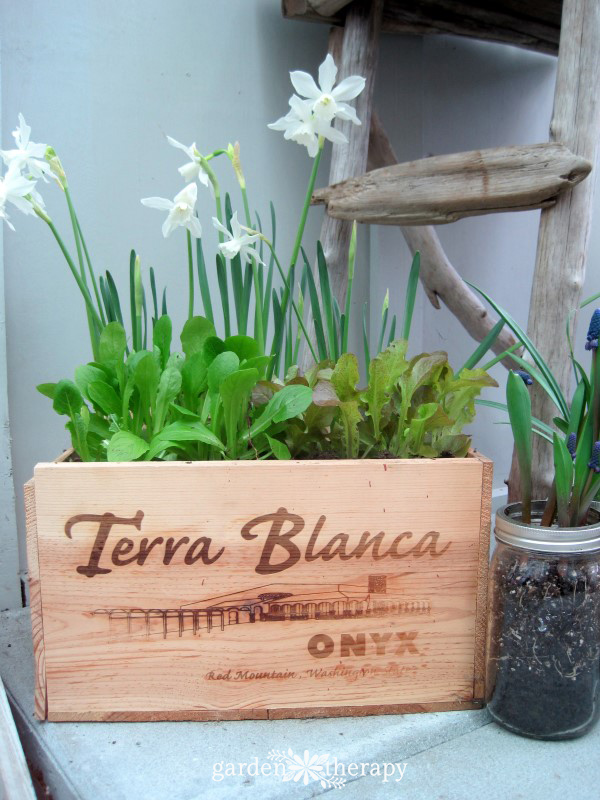 wine box planter