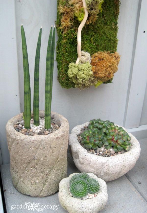 refined hypertufa planters