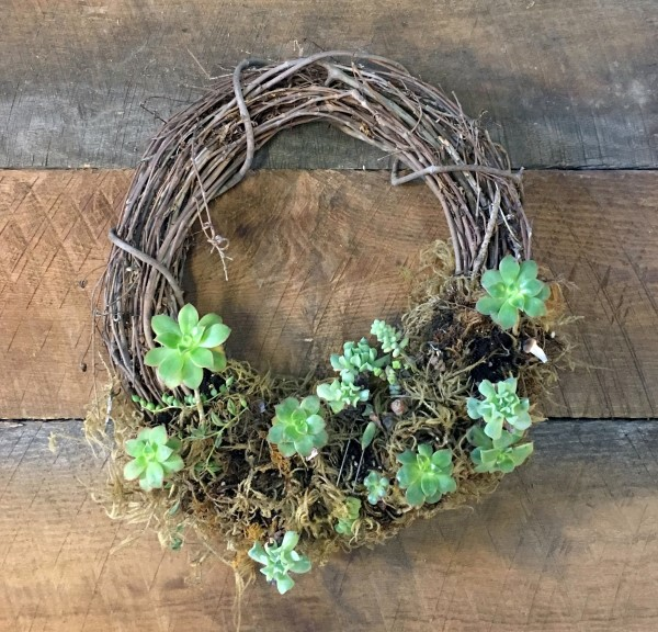 Succulent wreath in need of a refresh.