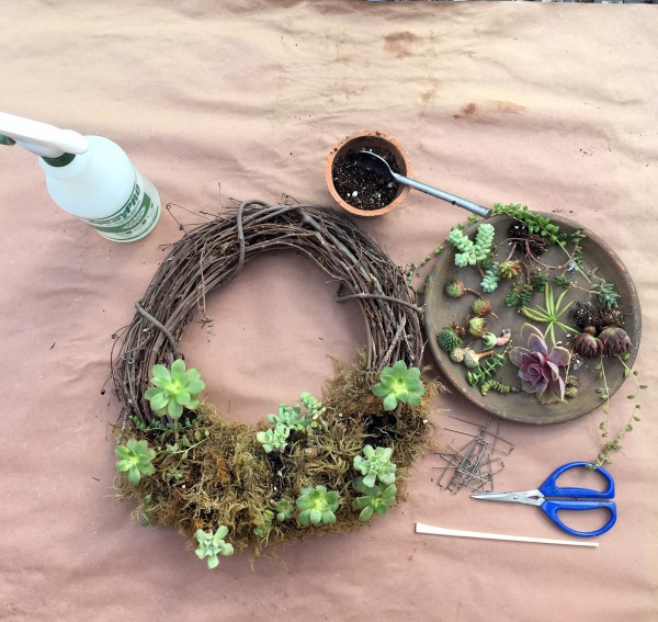 Adding new plants to a succulent wreath.