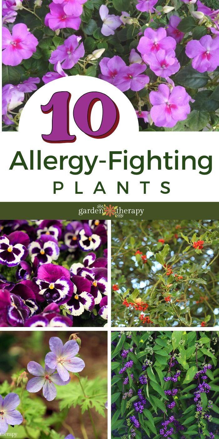 10 Allergy Fighting Plants