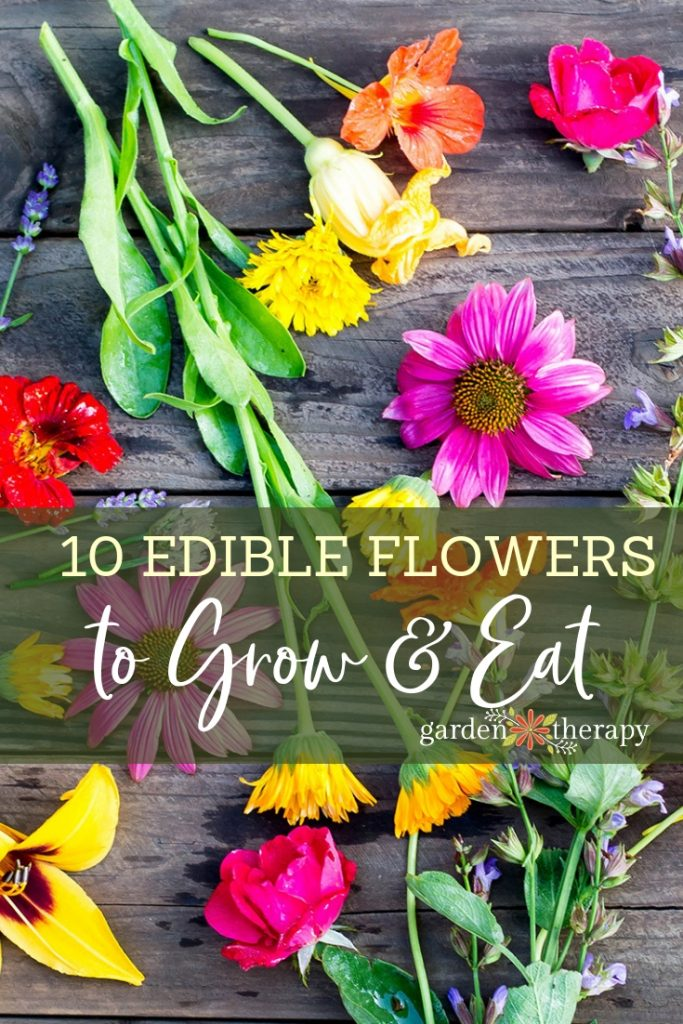 10 Edible Flowers to Grow in your Garden (1)