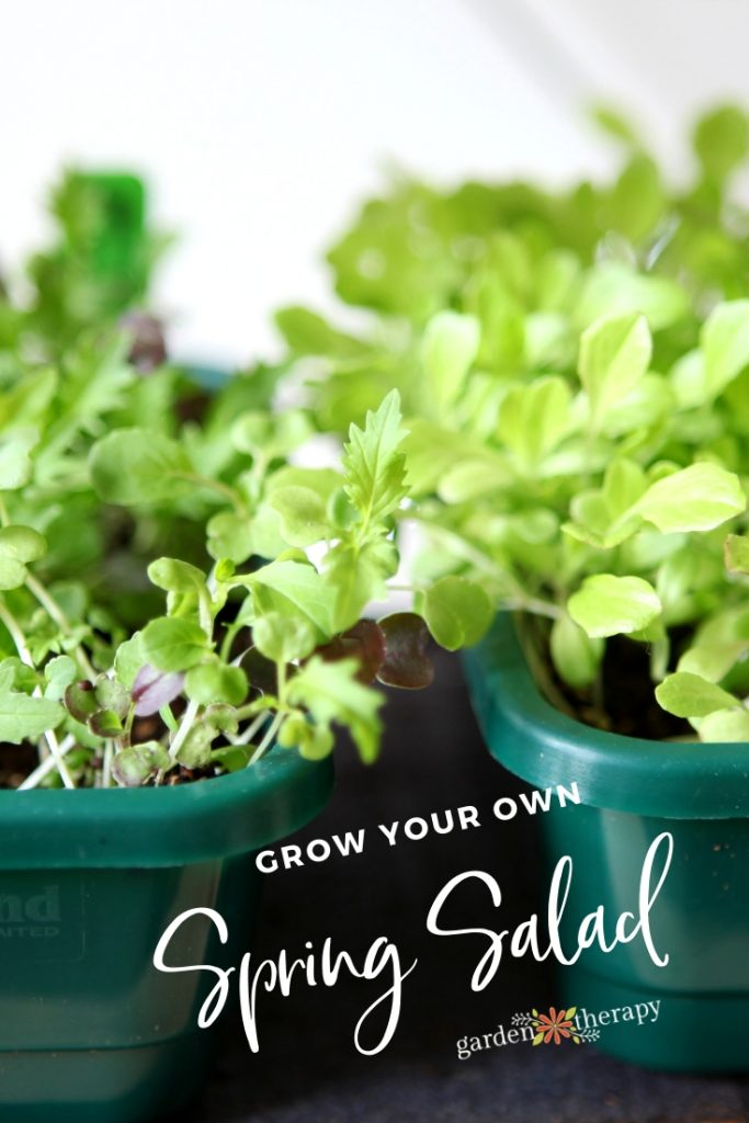 Grow Your Own Spring Salad