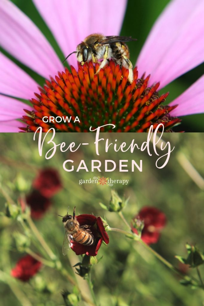 Grow a Bee-Friendly Garden