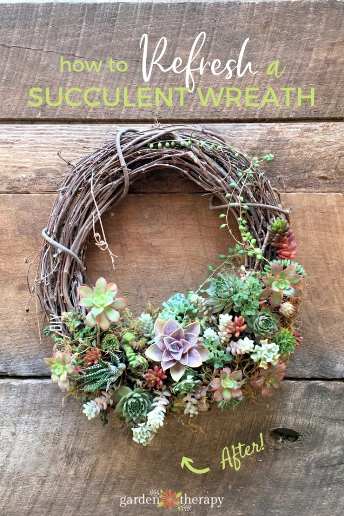How to refresh a succulent wreath