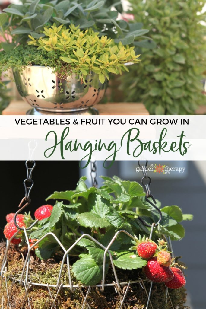Vegetables and Fruit You can Grow in Hanging Baskets