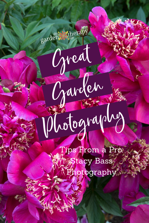 How to Take Great Garden Photography Tips from a Pro Stacy Bass Photography and gorgeous fuchsia peonies