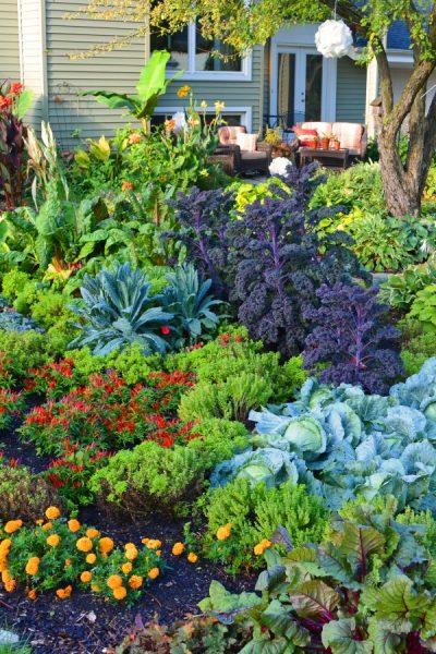 Create a No-Till Garden and Retire Your Tiller Forever