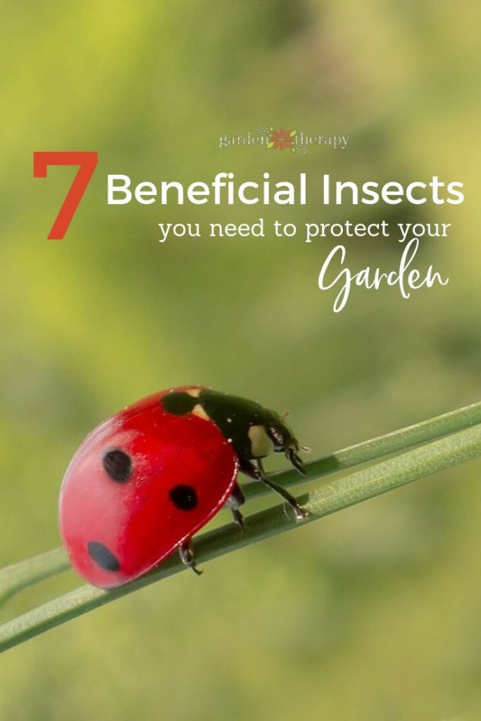 7 Beneficial Insects You Need to Protect Your Garden