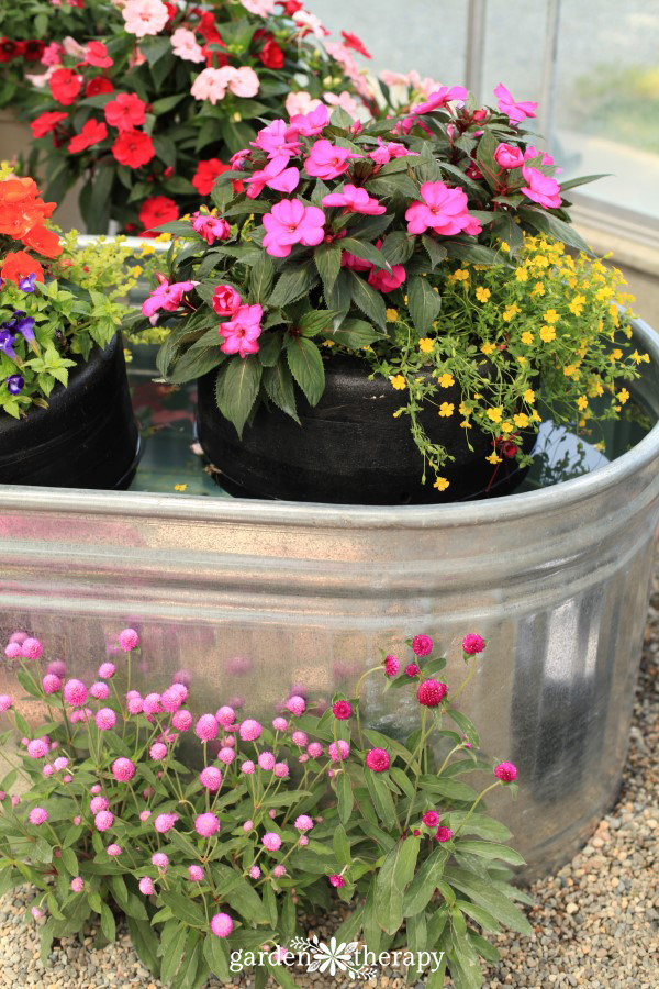 floating SunPatiens planter