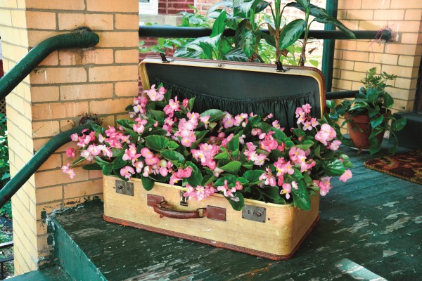 Plant begonias in a vintage suitcase
