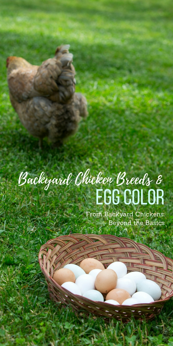 Backyard Chicken Breeds And Egg Color Garden Therapy
