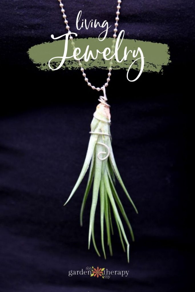 Gorgeous Living Jewelry with Air Plants