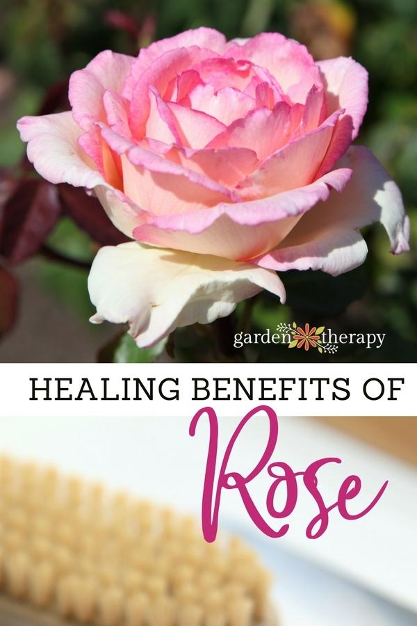 Healing-Benefits-of-Rose