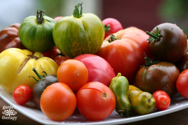 Heirloom Tomatoes on a white plate