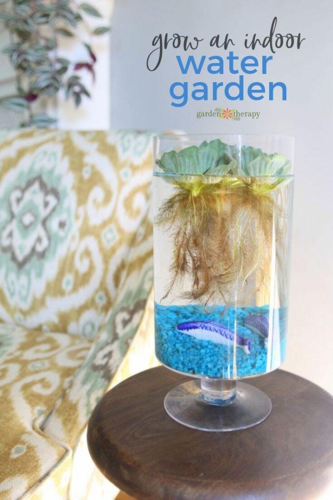 grow an indoor water garden on your tabletop