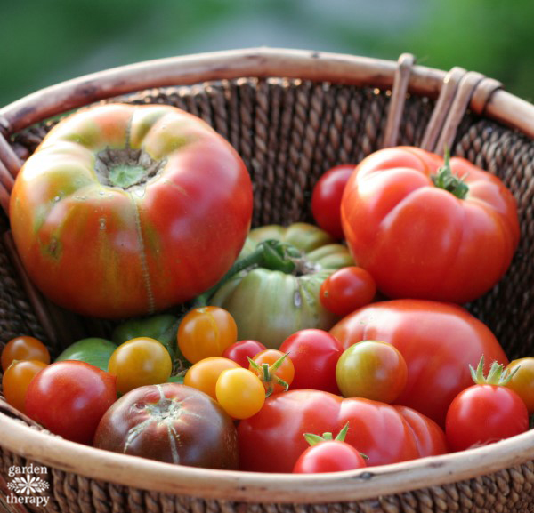 Grow the best tomatoes in town with these tips