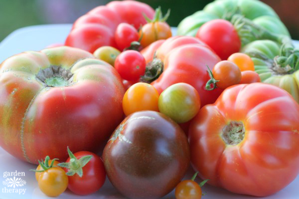 different varieties of tomatoes grouped together