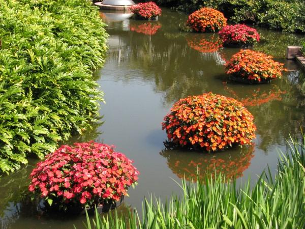 pond planters