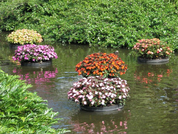floating planters for a pond