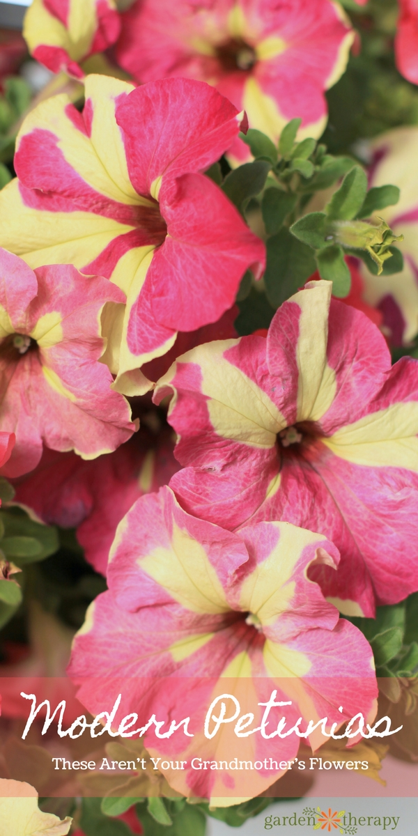 This list of Modern Petunia Varieties is amazing