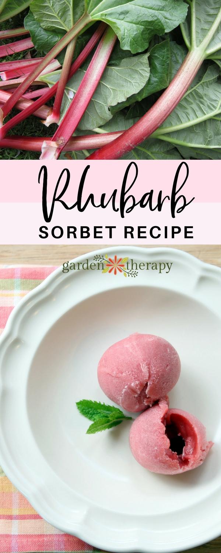 how to make rhubarb sorbet