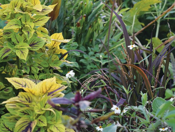 Plant edibles at the edge of the garden for a smart landscaping solution