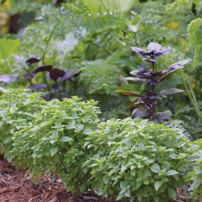 Edible Edges: Landscaping That's Good Enough to Eat!
