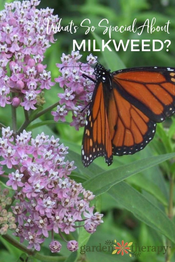 What's So special About Milkweed_