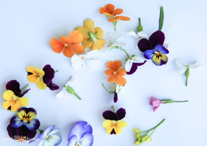 violas for flower ice cubes