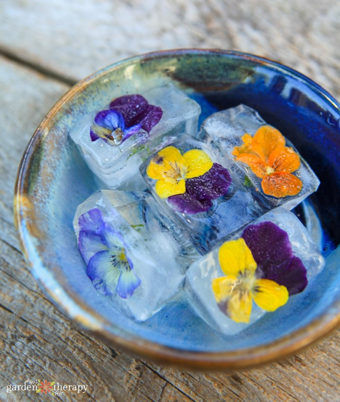 bowl of flower ice cubes