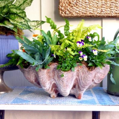 Summering Houseplants in Beautiful Arrangements